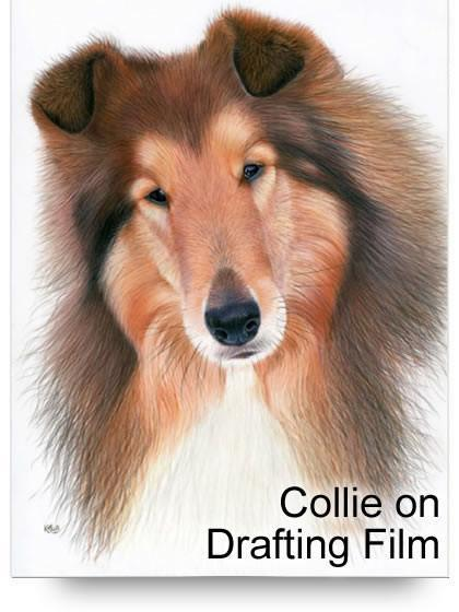 Collie on Drafting Film Colored Pencil Project Kit - Instant Download-Colored Pencil Project Kits-Ann Kullberg