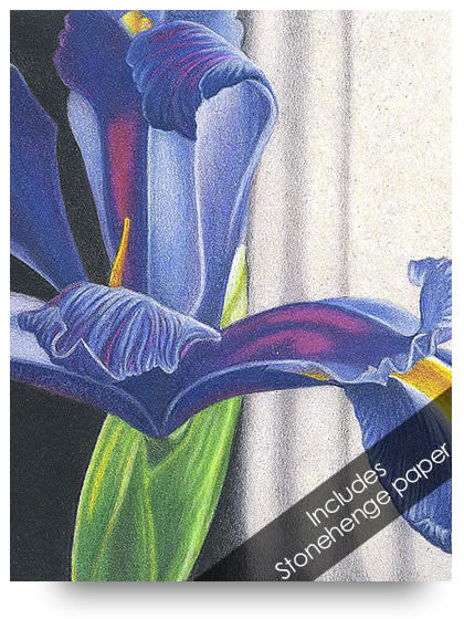 Iris Colored Pencil Project Kit-Colored Pencil Project Kits-Ann Kullberg