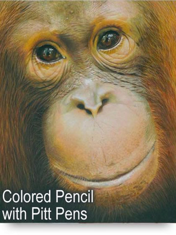 Orangutan Colored Pencil Project Kit - Instant Digital Download-Colored Pencil Project Kits-Ann Kullberg