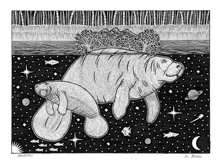 Manatees | Bear Fishing | Octopus on Drums | Trout Leaping | 8X10 Pen & Ink Art Prints Uni-T