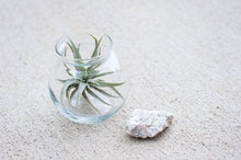 Glass Globe Hanger/Planter for Tillandsia/Air Plants, Flowers or Candle Uni-T