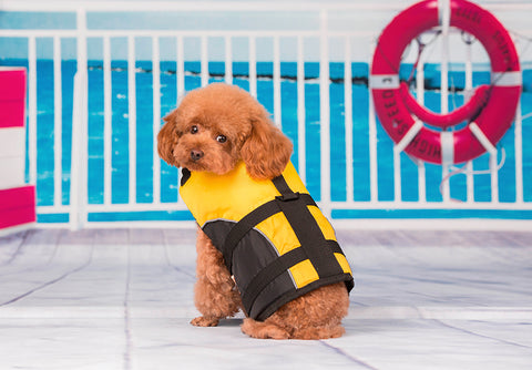 Cheerful Yellow Pet Life Vest