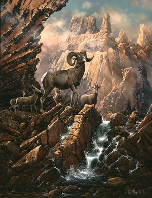 Canyon Lake Bighorns