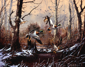 Snowy Morning Mallards
