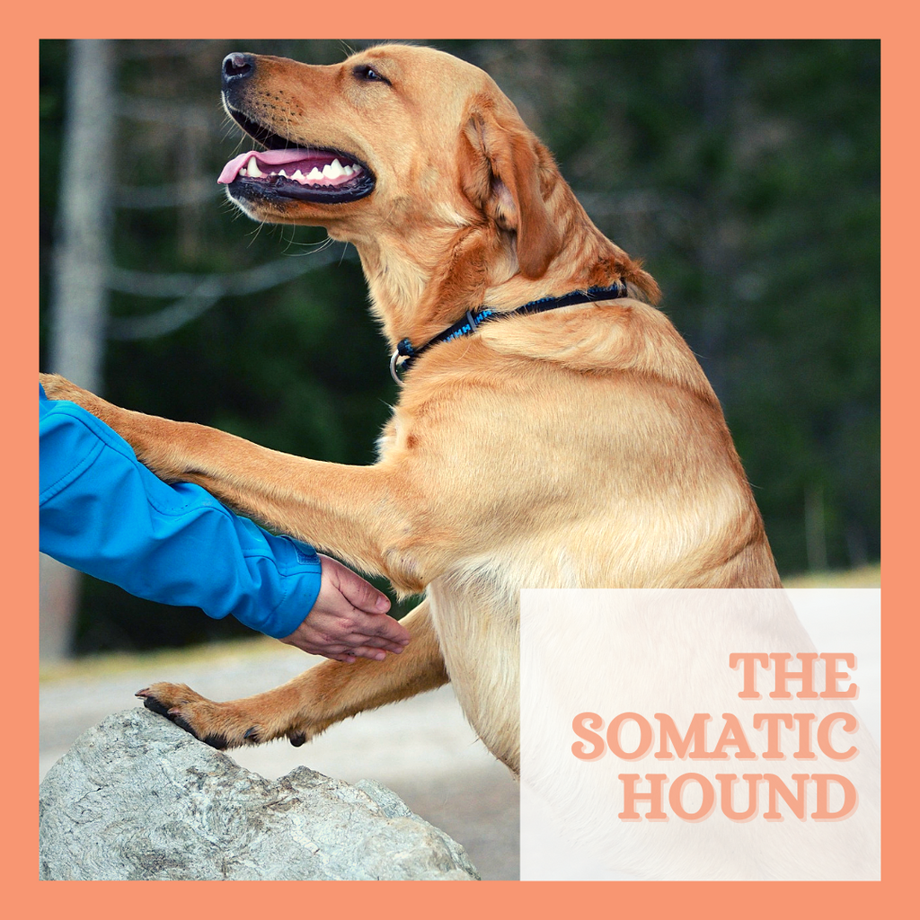The Somatic Hound Online Course