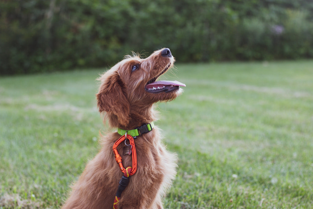Commands vs. Labels: How to Speak So Your Dog Will Listen