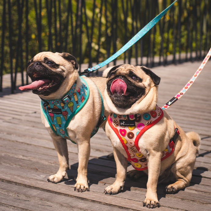 Dog Harnesses vs Collars