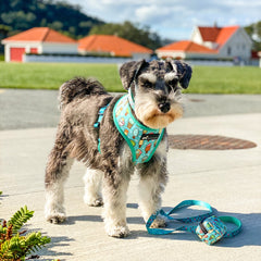 Healthy Dog and Co Minty Ice Harness and Leash