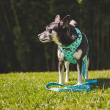 Load image into Gallery viewer, Adjustable Dog Harness -  Sea Breeze