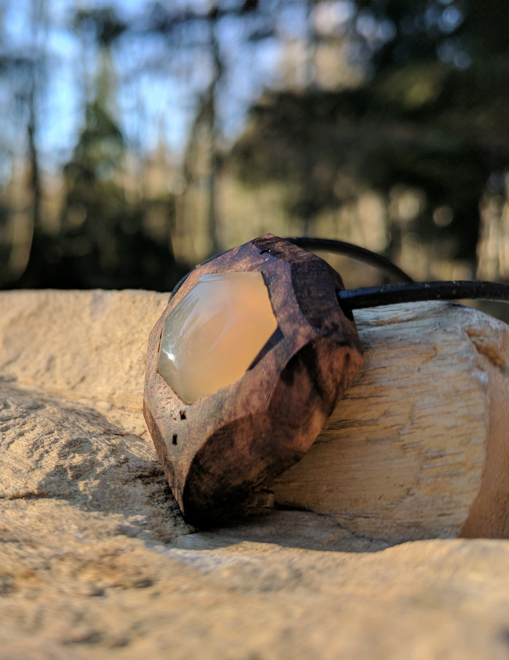 Agatized Clam in Black Walnut Burl