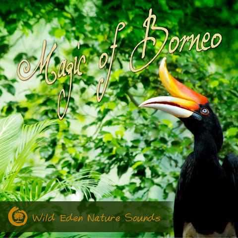 "[""Magic of Borneo"", ""relaxing sounds of nature"", ""singing birds""]"