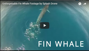 Fin Whale Footage by the Splash Drone