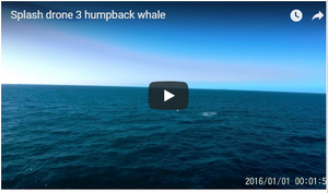 Splash Drone 3 and Humpback Whales
