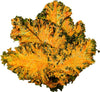 Kale Chips Vegan Cheeze