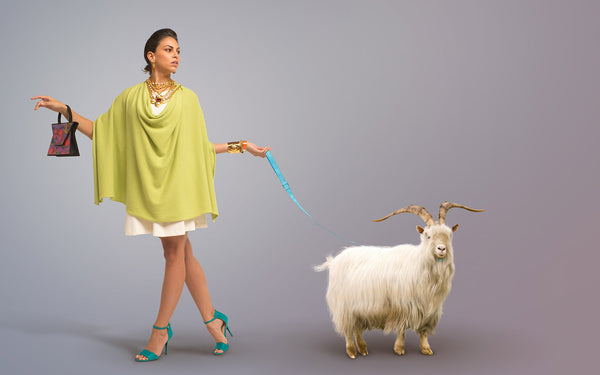 Cashmere styled model walking with Mongolian cashmere goat