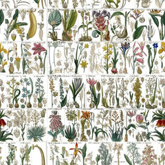 Fabulous Botanical Style Herbs and Fauna Wallpaper