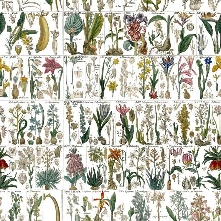 Cottage Garden (fabric)