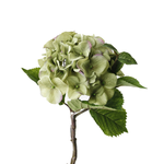 FLOWER SYSTEMS Late Summer Hydrangea Green