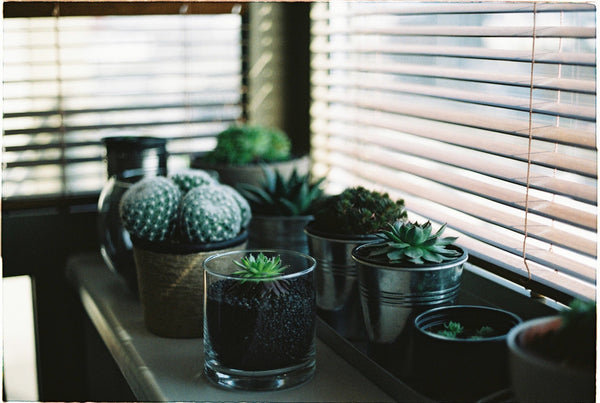 Houseplants and succulents to connect yourself to nature for Earth Hour.