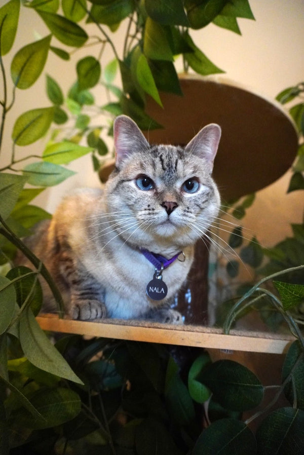 10 Houseplants that are Safe for your Cat and Dog
