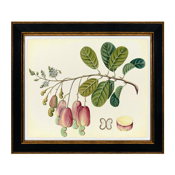 botanical art, framed print vi