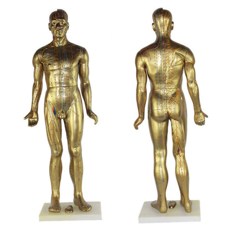 "Golden Male Body Model 33"" Tall"