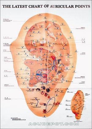 The Latest Chart Of Auricular Points 21 Quot X 30 Quot Acudepot