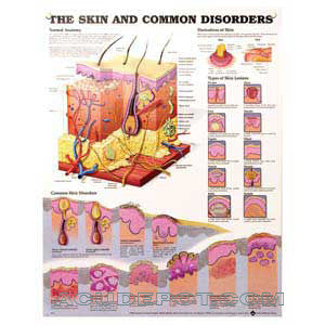 THE SKIN AND COMMON DISORDER