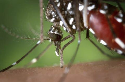 West Nile Virus is Back! Massachusetts Dept. of Public Health warns
