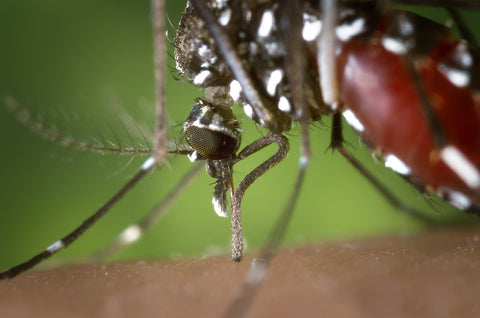 West nile virus, mosquito borne disease, insect repellent