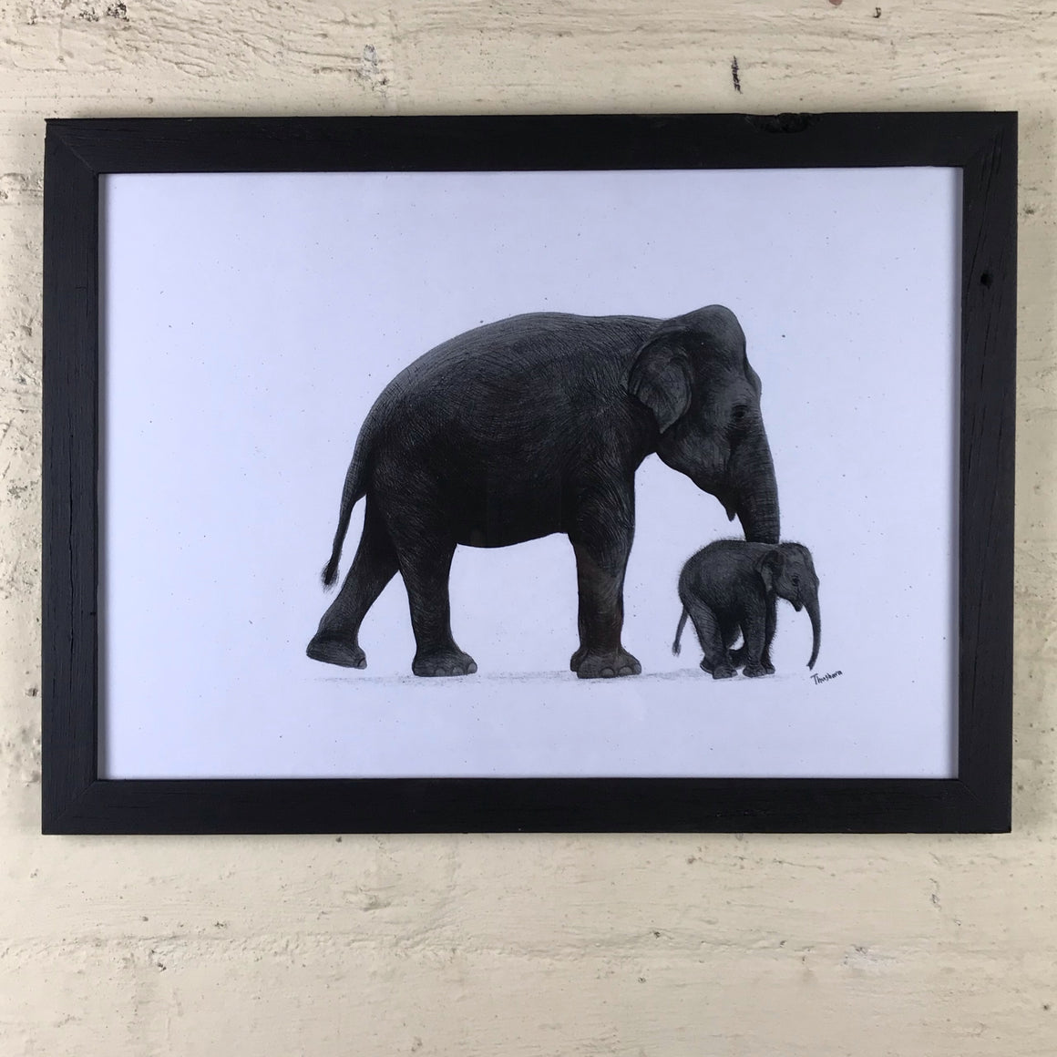 Sri Lankan Elephants (Framed)