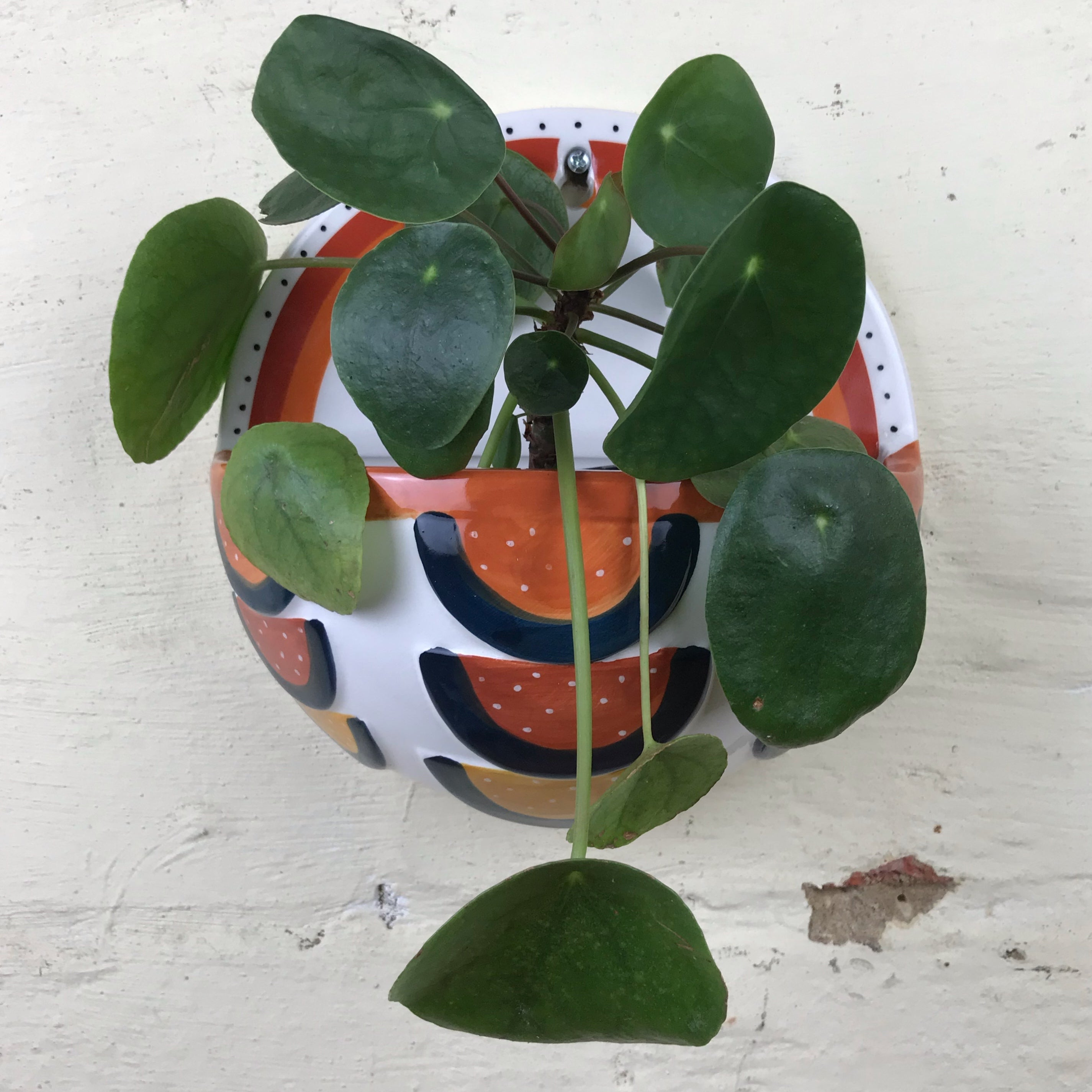 Tropical Envy Wall Vase Planter Mulbury