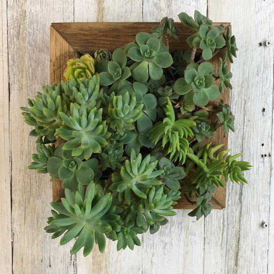 Small Vertical Garden