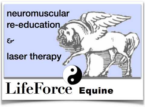 Equine Full Hour Session & Assessment