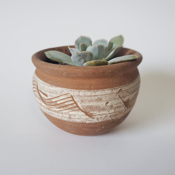 White and Tan Pottery Succulent