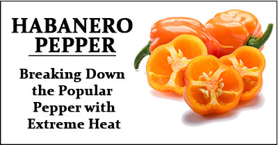 Habanero Pepper: Breaking Down the Popular Pepper with Extreme Heat Guide