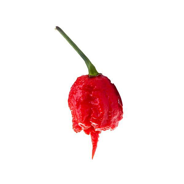Carolina Reaper Seeds Hot Pepper Seeds Sonoran Spice