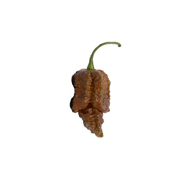 Chocolate Apocalypse Seeds Hot Pepper Seeds Sonoran Spice