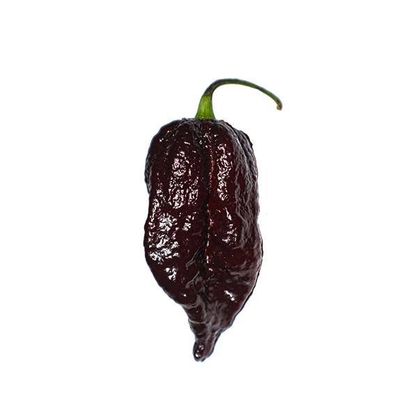 Chocolate Ghorpion Seeds Hot Pepper Seeds Sonoran Spice