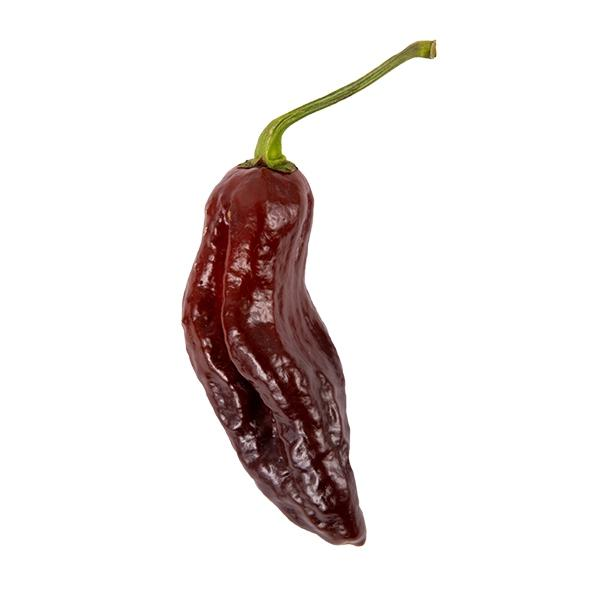 Chocolate Ghost Pepper Seeds Hot Pepper Seeds Sonoran Spice