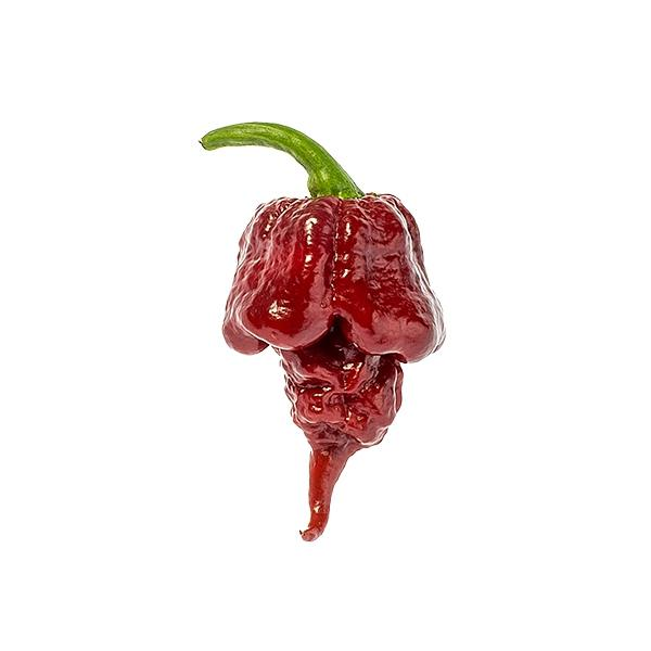 Chocolate Reaper Seeds Hot Pepper Seeds Sonoran Spice