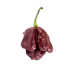 Chocolate Trinidad Scorpion Seeds Hot Pepper Seeds Sonoran Spice
