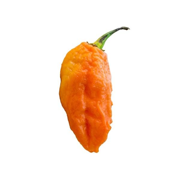 Peach Ghost Pepper Seeds Hot Pepper Seeds Sonoran Spice