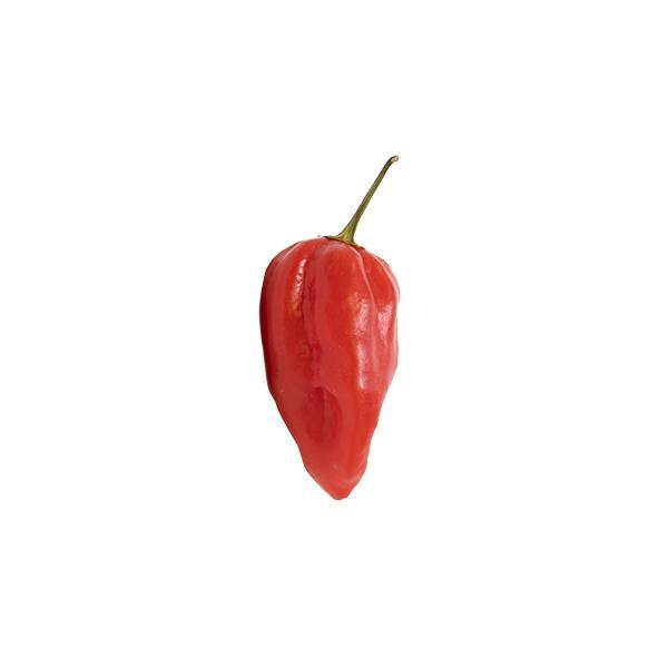 Fully Ripe Purple Ghost Pepper