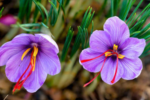 Saffron Threads (Crocus Sativus) Pure Indian Kashmiri Saffron Saffron Sonoran Spice