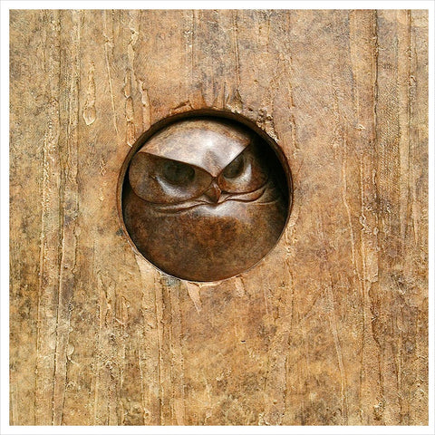 Little Owl Plaque by Adam Binder