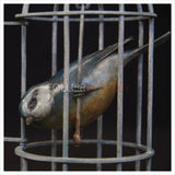 Blue Tit in Birdcage by Adam Binder