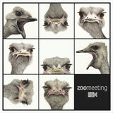 ZOOmeeting by Dominique Salm