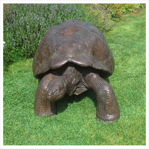 Galapagos Tortoise II by Gill Parker