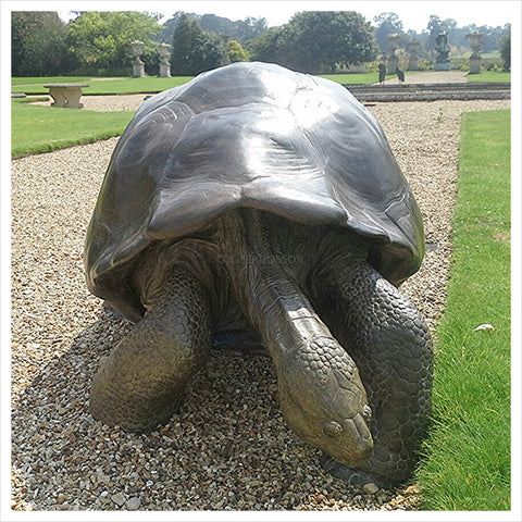 Galapagos Tortoise I by Gill Parker